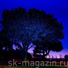 Цветной светодиодный проектор для деревьев и зданий. Цвет: синий